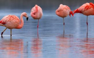 Flamingo Kostüm